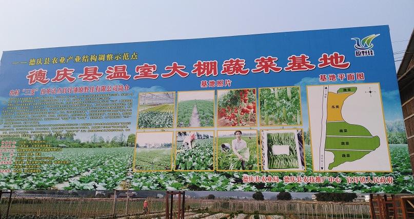 蔬菜大棚蔬菜基地