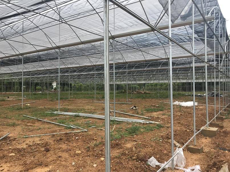 育苗温室大棚工程案例-煌城温室