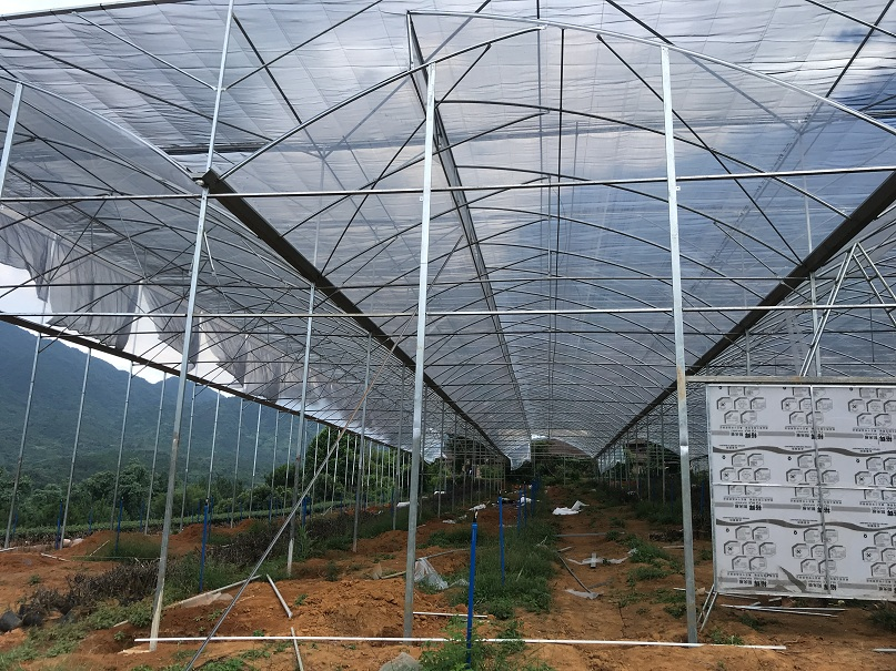 韶关市罗坑镇茶花园温室大棚-广州市煌城温室工程温室花园大棚案例